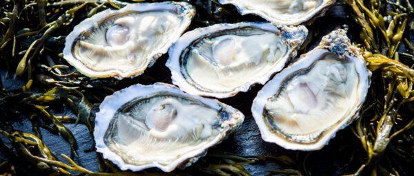 Kellys Giga Oysters